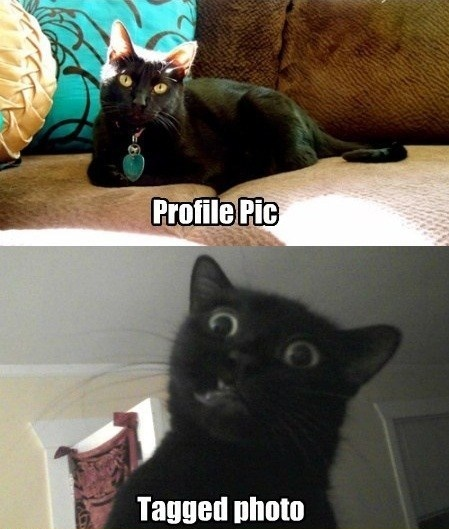funny cat caption picture profile pic tagged photo