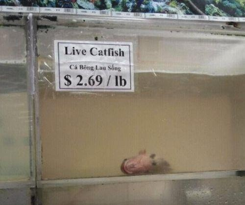 funny fail pic live catfish dead fish in tank