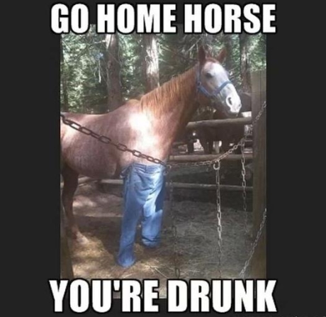 funny go home you are drunk horse wearing pants