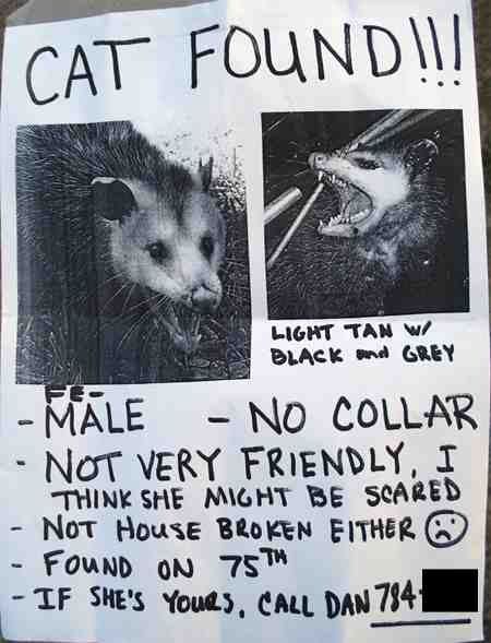 funny fail cat found really possum not very friendly