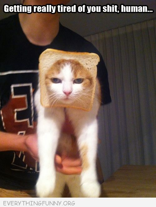 Funny Caption Inbred Cat Getting Real Tired Your Human