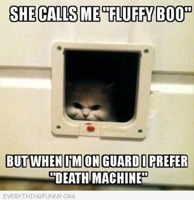 funny caption evil cat hiding in box fluffy death machine