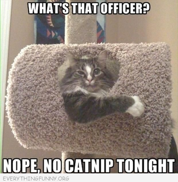 funny caption cat looks drunk no officer no catnip tonight