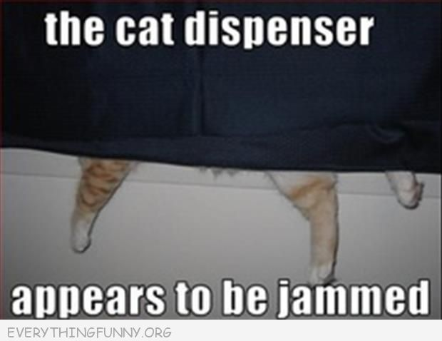 funny caption picture the cat dispenser appears to be jammed