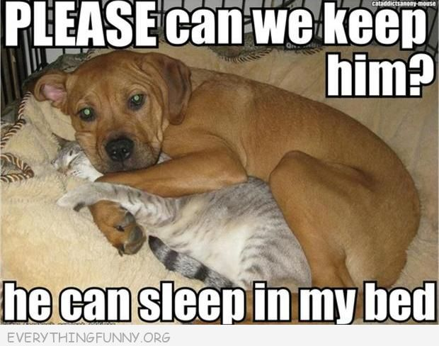 funny caption dog please can we can keep him he can sleep in my bed