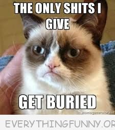 grumpy cat meme pic the only i give gets buried