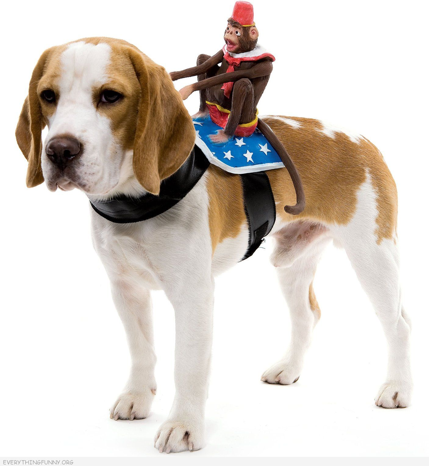 funny gifts pet costume monkey riding harness funny dog costumes