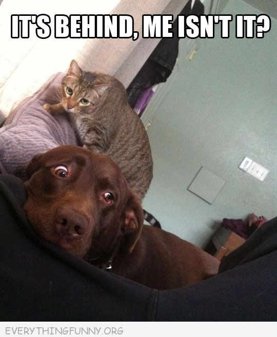 funny caption cat behind scared dog it's behind me isn't it funny dog photos