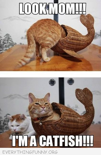 funny cat ictures cat corncopia basket look i'm a catfish
