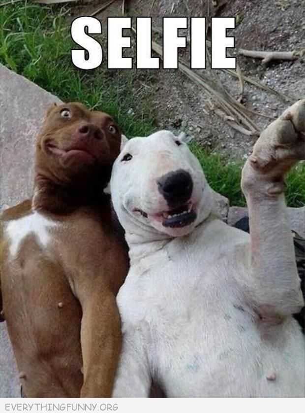 funny dog pictures selfie