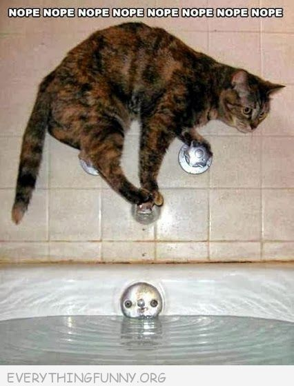 funny caption cat standing on bathtub spigot tub knobs doesn't want bath