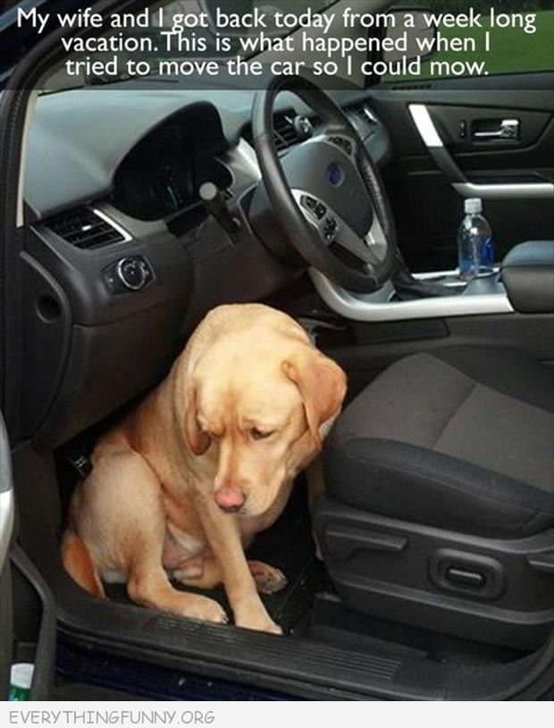 funny caption sad dog sits in front seat so people can't leave on vacation