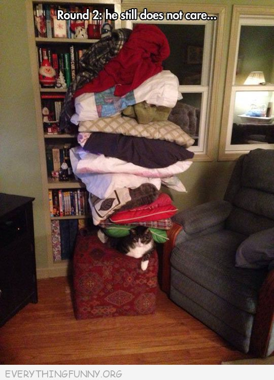 funny cat pictures blankets pillows piled on top still will not move