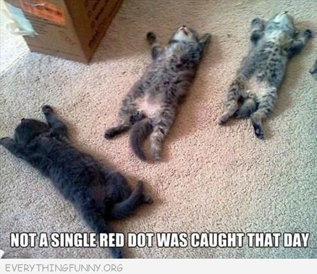 funny caption and not a single red dot was caught that day 3 cats sleepin on backs funny cat picture