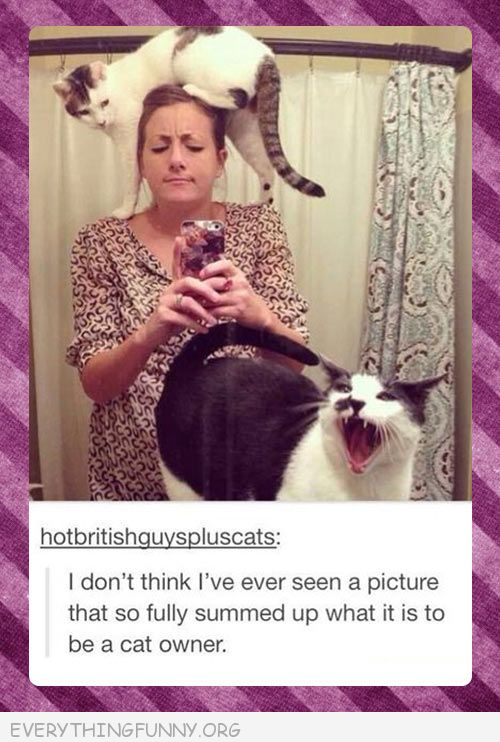 funny tumblr post how to feels to be a cat owner