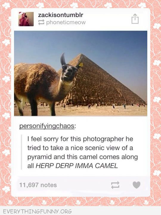 funny tumblr posts camel photobomb derp