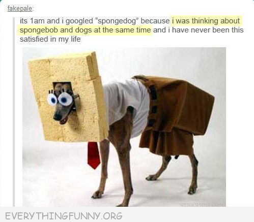 funny tumblr post  spongebob square dog was not disappointed google search