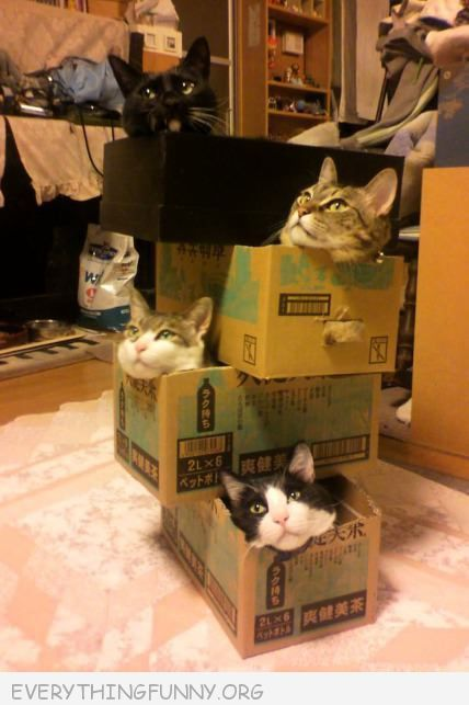 funny 4 cats in 4 stacked boxes