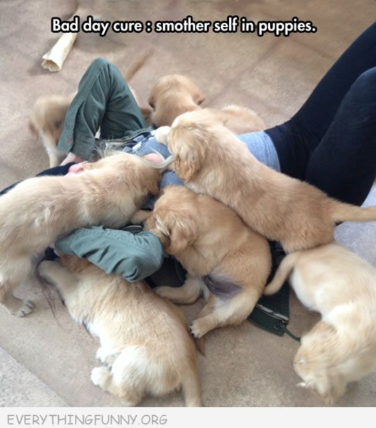 funny dog pctures day day cure smother self with puppies
