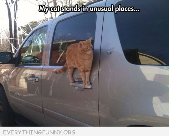 funny cat pictures my cat stands in strange place car door handle