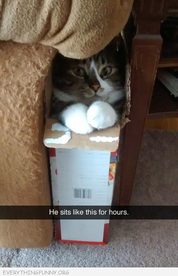 funny cat picture sits in this box like this for hours