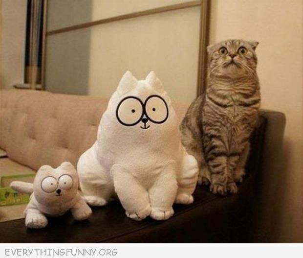 funny cat pictrues stuffed cats big eyes next to real cat