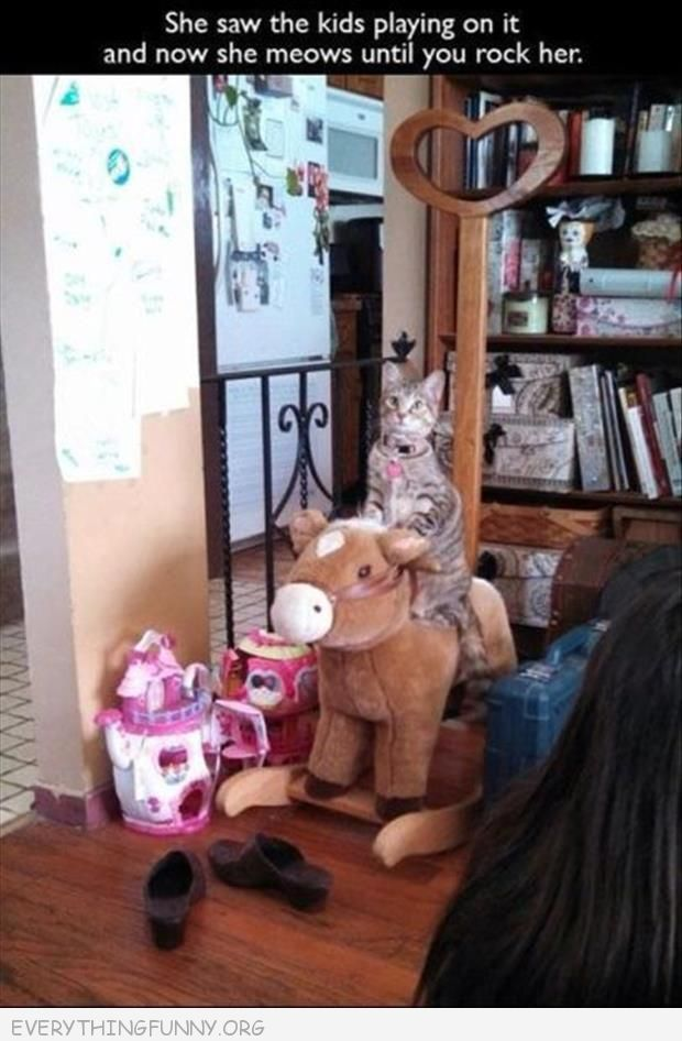 funny cat picture cat rocking horse meows until you rock her aw kids do it