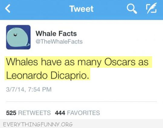funny twittr whale facts whales have as any oscars as leonardo dicaprio