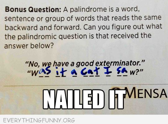funny nailed it was it a cat i saw paladrome