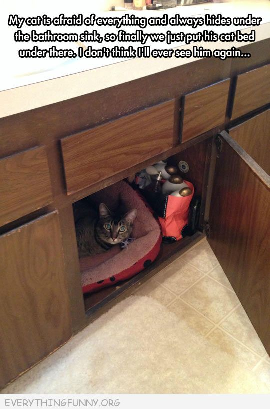 funny caption cat hides under cabinet made it a bed will never see again