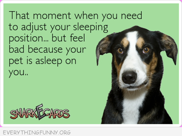 funny quote that moment when you need to adjust sleeping postion but feel bad pet asleep