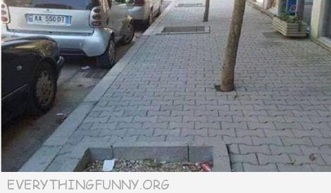 funny photos trees planted in wrong place on street