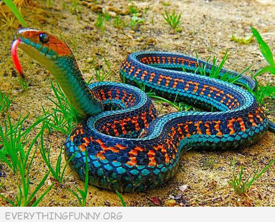 funny caption most beautiful snake