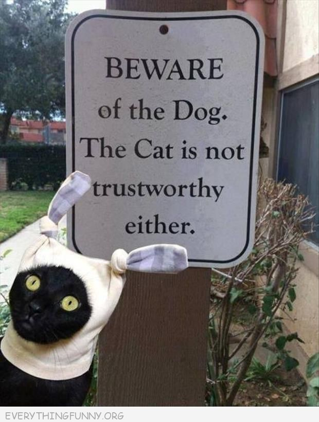 funny beware of dog cat is not trustworthy either sign