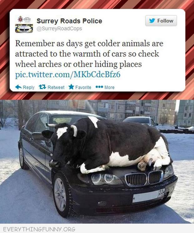 funny twitter beware check for animals during cold hid in car wheels