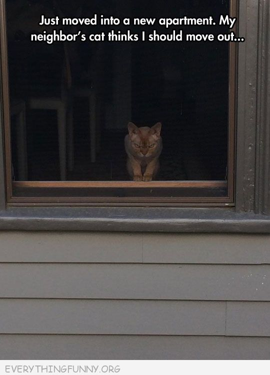 funny caption angry neighbor cat not happy i moved in