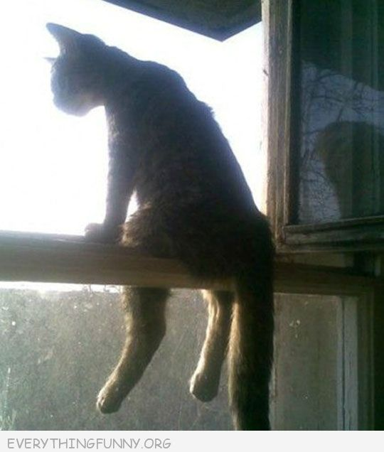 funny picture cat sitting like human on window sill