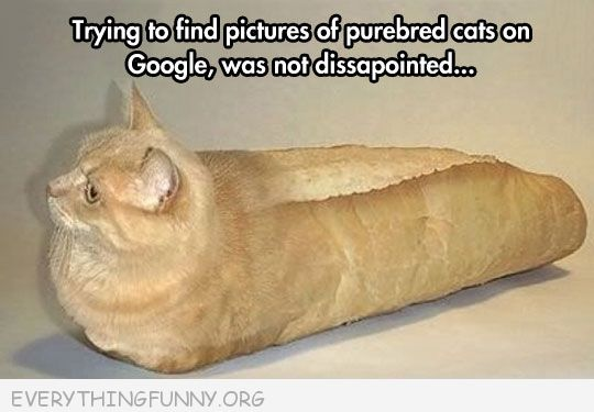 funny caption looked up purebred cats wasn't disappointed