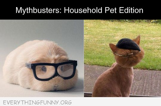 funny mythbusters pet edition