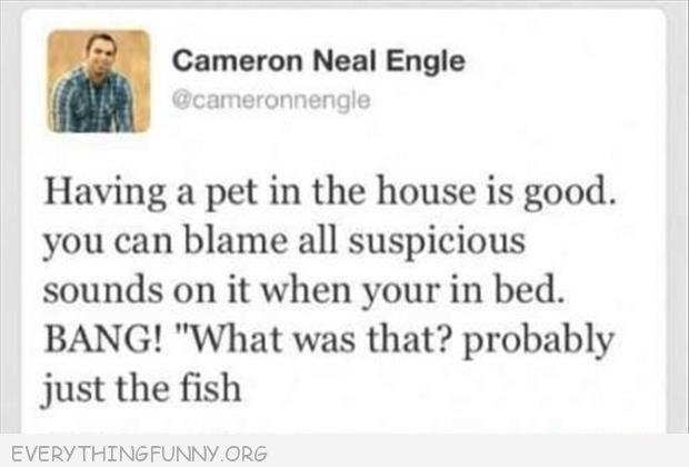funny twitter tweet having a pet in house use to blam loud noise it must have been the fish