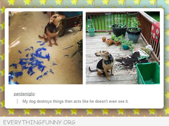 funy tumblr post dog destroys things and pretends he doesn't see it