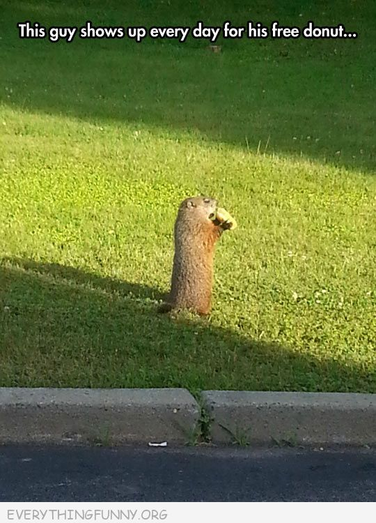 funny squirrel stops by every day for a doughnut