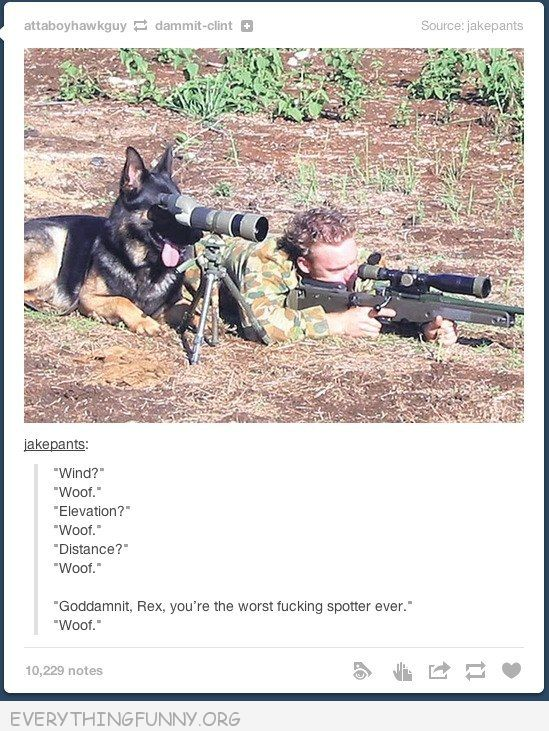 funny tumblr post dog gun military looking through view finder