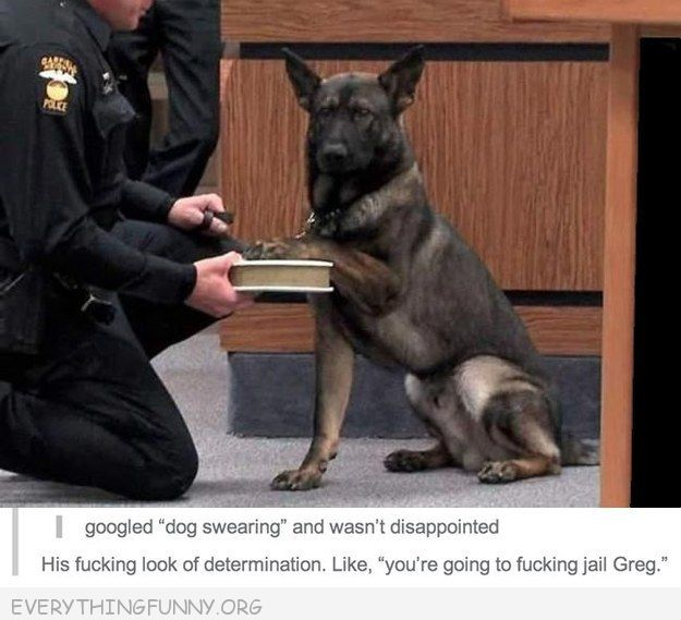 funny tumblr google dog swearing wasn't disappointed