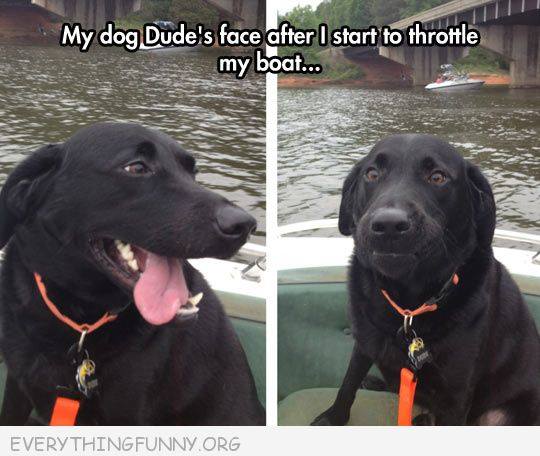funny capton dogs face changes concern when owner starts boat