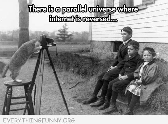 funny caption alternate universe where cats watch film take pictures of humans