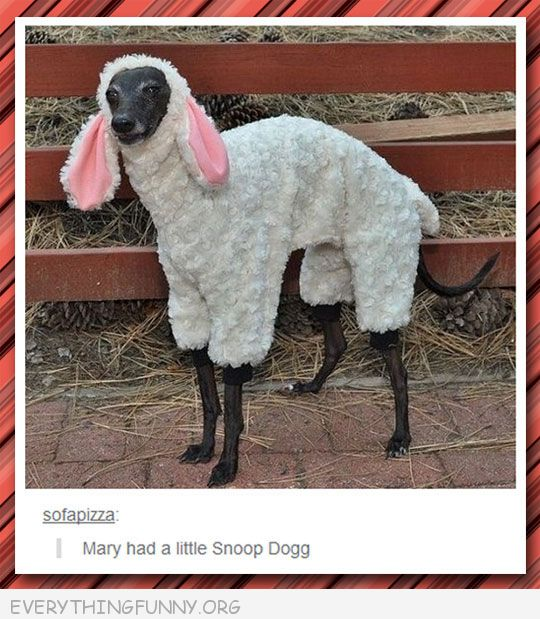 funny tumblr dog dressed as sheep mary had a little snoop dog