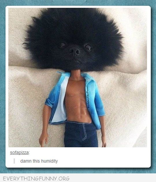 funny tumblor fluffy dog head on doll body damn this humidity