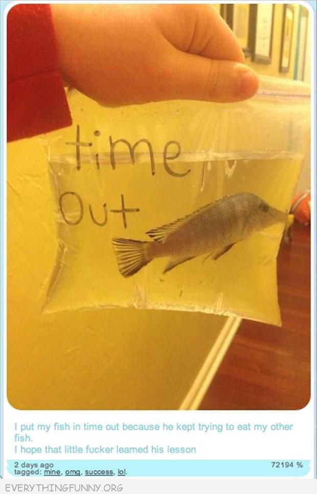 funny tumblr put fish in time out for eating other fish