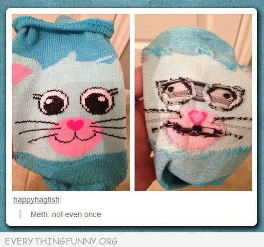 funny tumblr inside out cat sock meth not even once